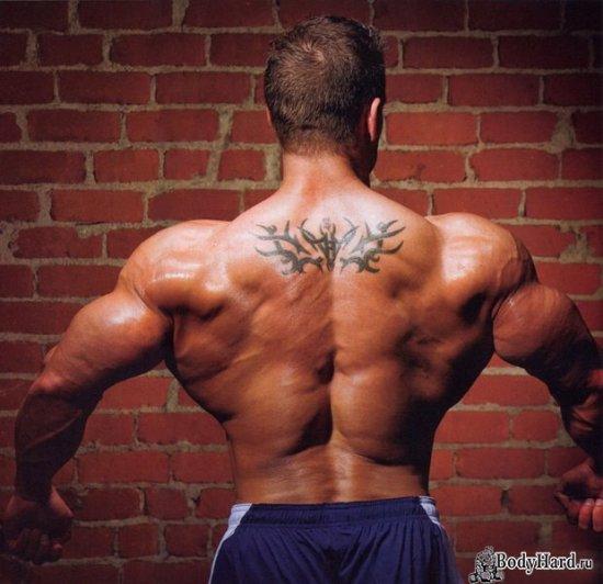 Тренировка на мышцы спины - делаем шире