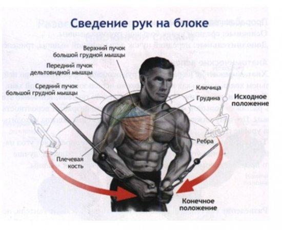 Качаем внутреннюю часть грудных мышц