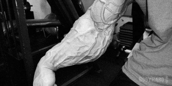 Влияние азотных добавок на различные мышечные волокна