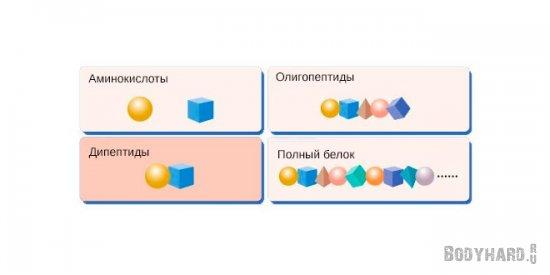 содержание пептидов в гидролизованном белке