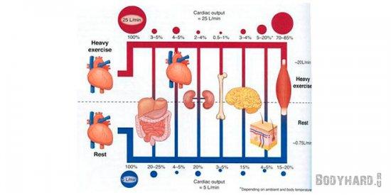 Увеличение проницаемости кишечника, путем оттока крови