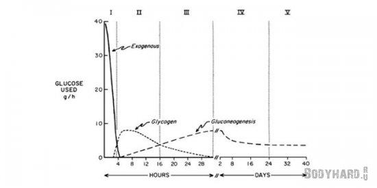 Как организм поддерживает запас глюкозы при голодании