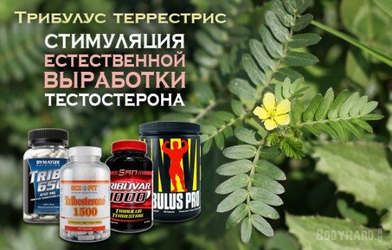 Препарат трибулус